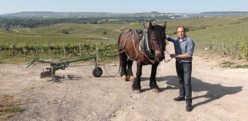 Erik De Sousa en los viñedos